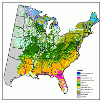 Current Forest Type Distribution for the Eastern U.S.